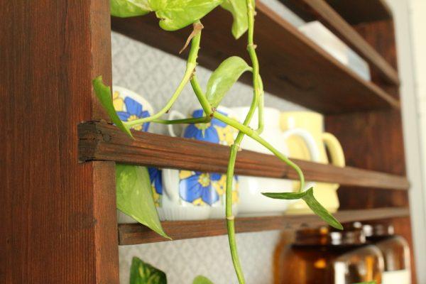 grönväxt på gammal tallrikshylla