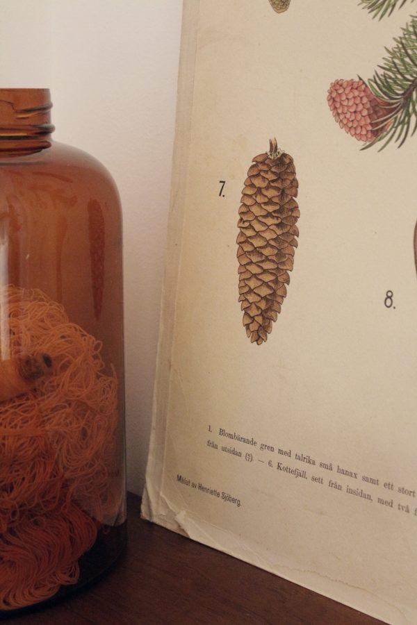 Skolplanch invid en stor gammal karhula apoteksburk
